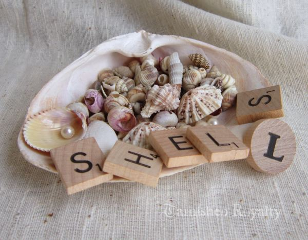 conch_shell_photo_holder_7a