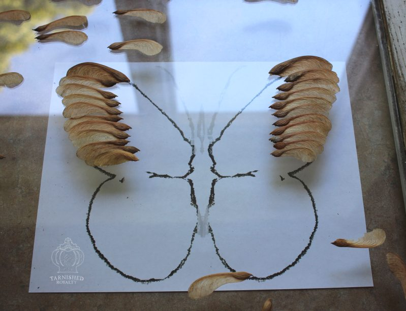 maple_seed_butterfly_art_step_3